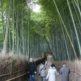 そうだ京都、行こう。日本三大美竹林 京都嵯峨野『竹林の道』を歩く